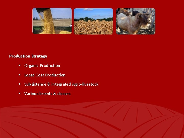 Production Strategy § Organic Production § Lease Cost Production § Subsistence & integrated Agro-livestock
