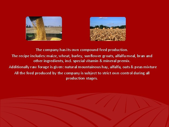 The company has its own compound feed production. The recipe includes: maize, wheat, barley,