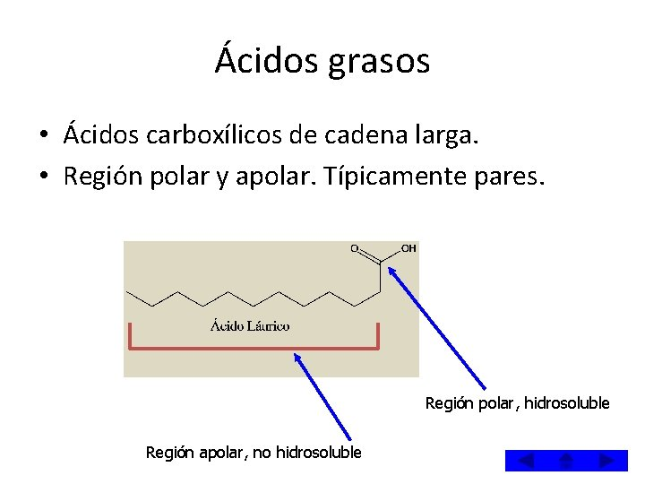 Ácidos grasos • Ácidos carboxílicos de cadena larga. • Región polar y apolar. Típicamente