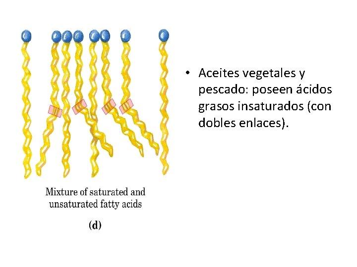 • Aceites vegetales y pescado: poseen ácidos grasos insaturados (con dobles enlaces).