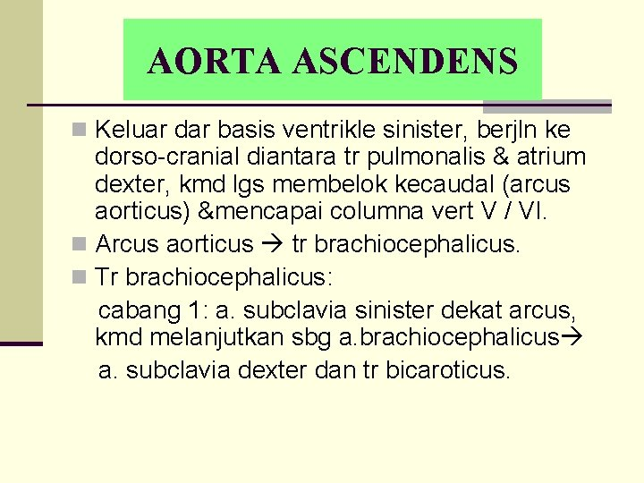 AORTA ASCENDENS n Keluar dar basis ventrikle sinister, berjln ke dorso-cranial diantara tr pulmonalis