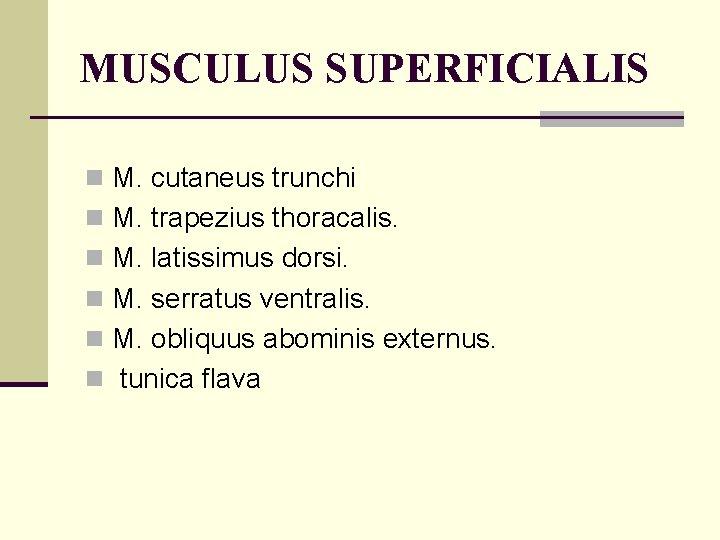 MUSCULUS SUPERFICIALIS n M. cutaneus trunchi n M. trapezius thoracalis. n M. latissimus dorsi.