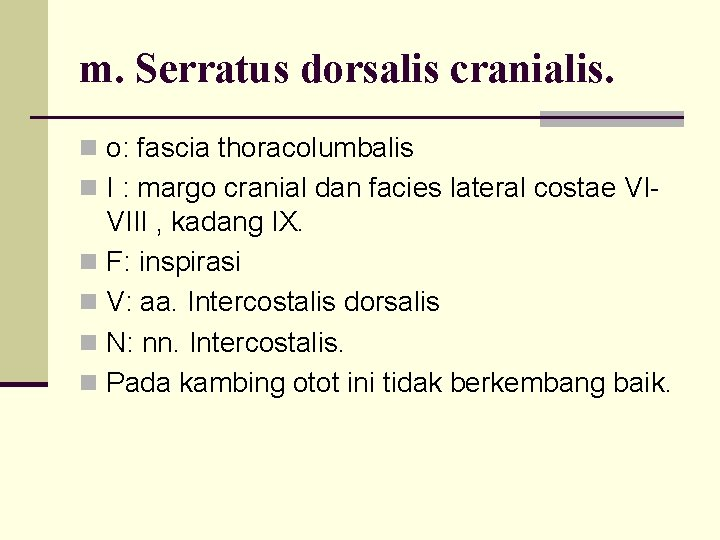 m. Serratus dorsalis cranialis. n o: fascia thoracolumbalis n I : margo cranial dan