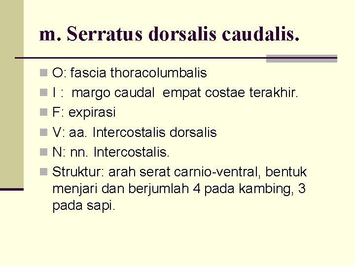 m. Serratus dorsalis caudalis. n O: fascia thoracolumbalis n I : margo caudal empat