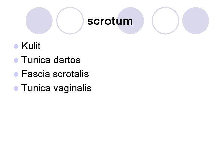 scrotum l Kulit l Tunica dartos l Fascia scrotalis l Tunica vaginalis