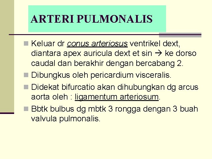 ARTERI PULMONALIS n Keluar dr conus arteriosus ventrikel dext, diantara apex auricula dext et