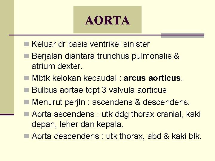AORTA n Keluar dr basis ventrikel sinister n Berjalan diantara trunchus pulmonalis & atrium