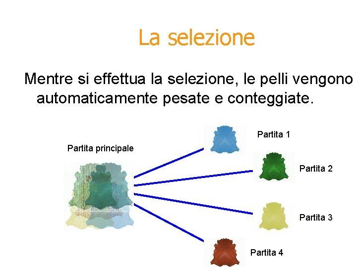La selezione Mentre si effettua la selezione, le pelli vengono automaticamente pesate e conteggiate.