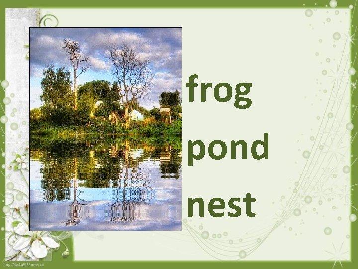 frog pond nest