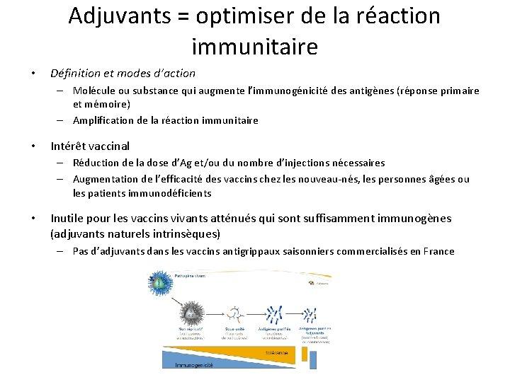 Adjuvants = optimiser de la réaction immunitaire • Définition et modes d'action – Molécule