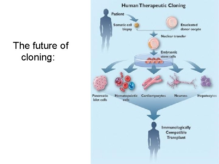 The future of cloning: