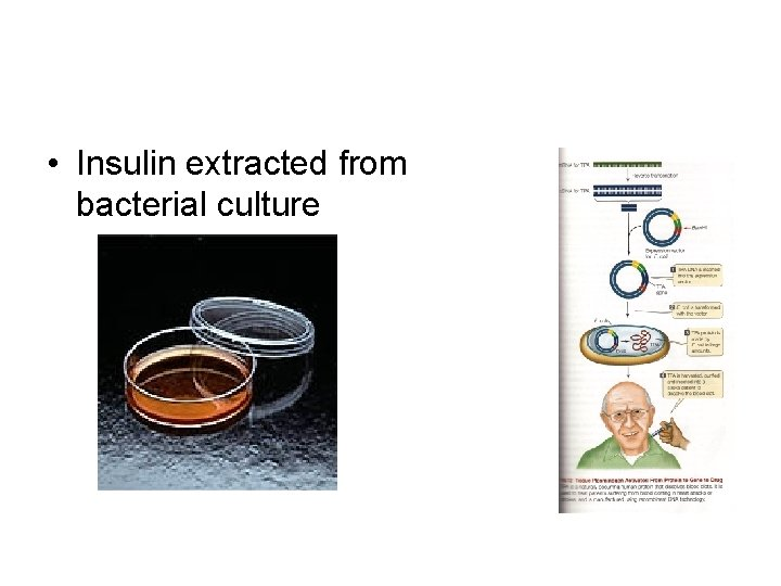 • Insulin extracted from bacterial culture