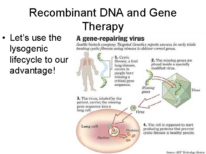 Recombinant DNA and Gene Therapy • Let's use the lysogenic lifecycle to our advantage!