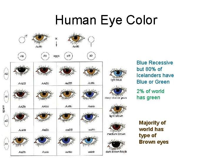Human Eye Color Blue Recessive but 80% of Icelanders have Blue or Green 2%