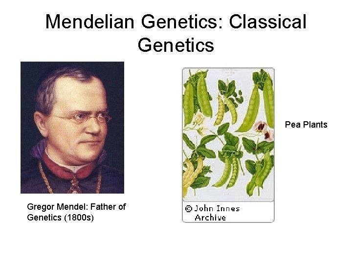 Mendelian Genetics: Classical Genetics Pea Plants Gregor Mendel: Father of Genetics (1800 s)