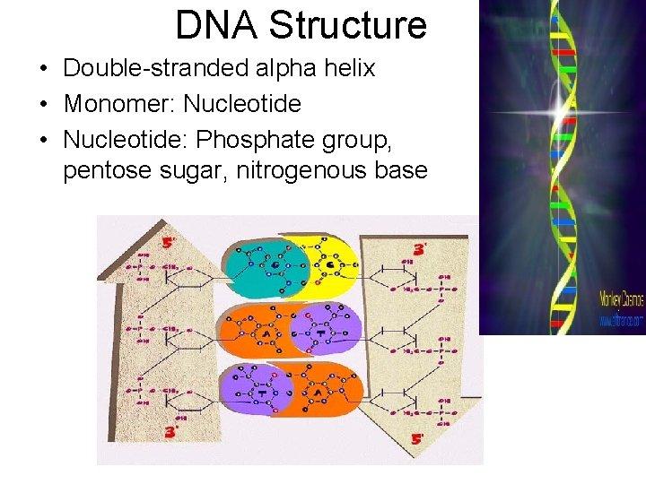 DNA Structure • Double-stranded alpha helix • Monomer: Nucleotide • Nucleotide: Phosphate group, pentose