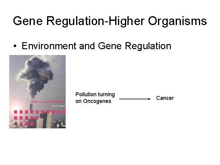 Gene Regulation-Higher Organisms • Environment and Gene Regulation Pollution turning on Oncogenes Cancer