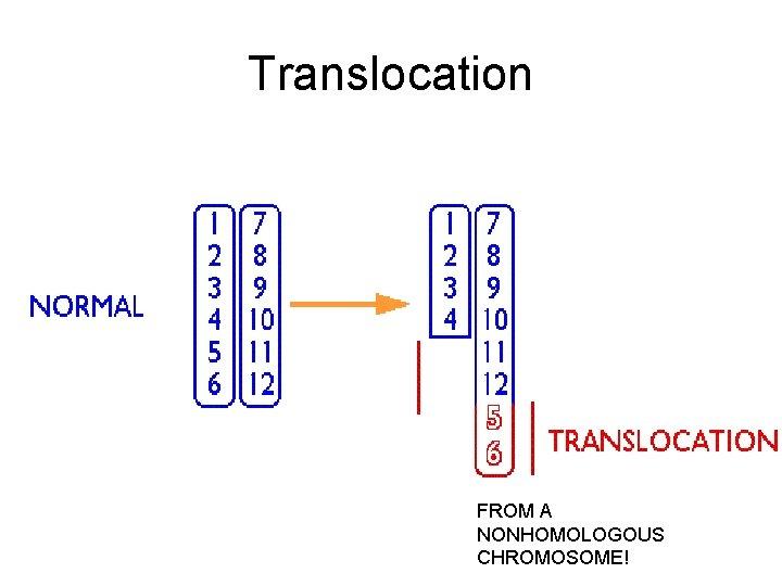 Translocation FROM A NONHOMOLOGOUS CHROMOSOME!