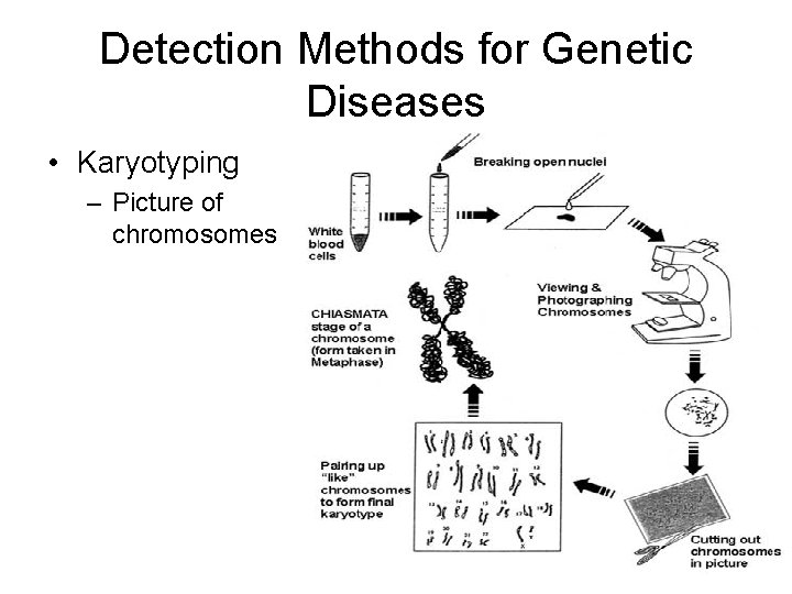 Detection Methods for Genetic Diseases • Karyotyping – Picture of chromosomes