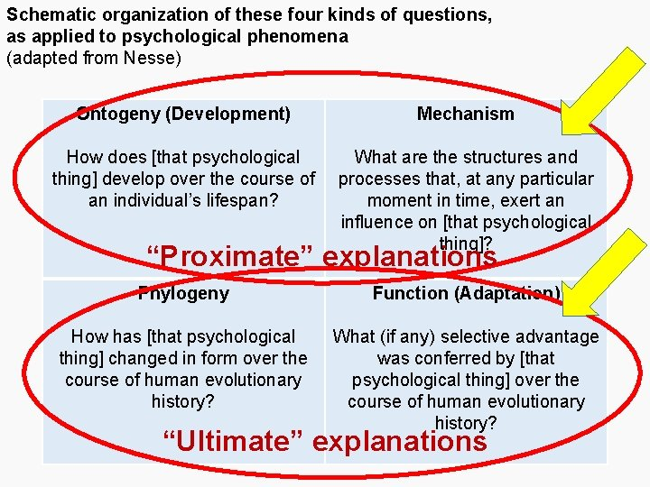 Schematic organization of these four kinds of questions, as applied to psychological phenomena (adapted