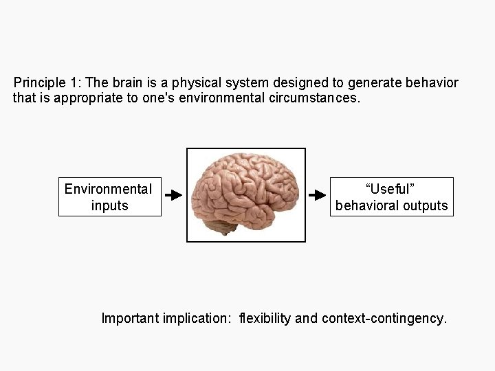 Principle 1: The brain is a physical system designed to generate behavior that