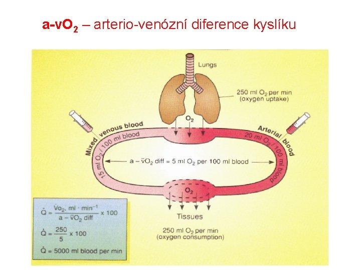 a-v. O 2 – arterio-venózní diference kyslíku