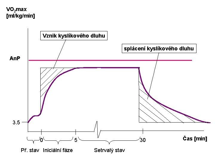 VO 2 max [ml/kg/min] Vznik kyslíkového dluhu splácení kyslíkového dluhu An. P 3. 5