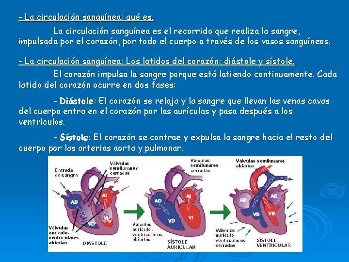- La circulación sanguínea: qué es. La circulación sanguínea es el recorrido que realiza