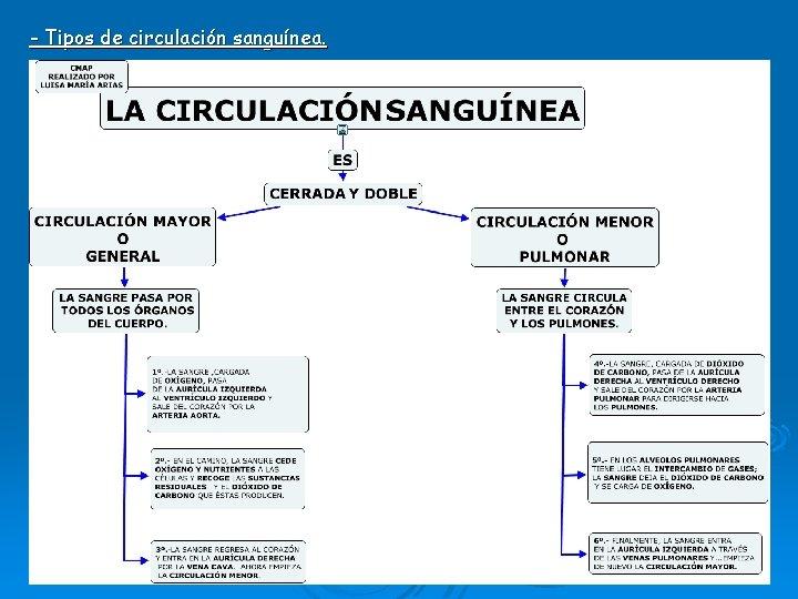 - Tipos de circulación sanguínea.