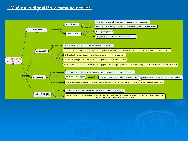 - Qué es la digestión y cómo se realiza.