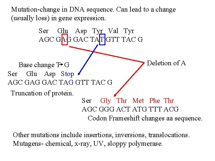 Mutation-change in DNA sequence. Can lead to a change (usually loss) in gene expression.