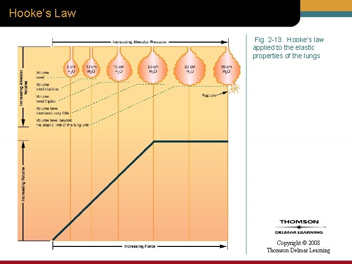 Hooke's Law Fig. 2 -13. Hooke's law applied to the elastic properties of the