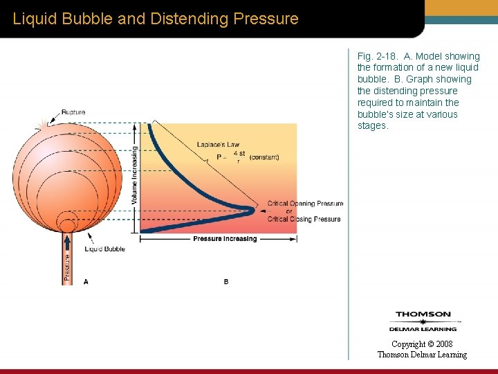 Liquid Bubble and Distending Pressure Fig. 2 -18. A. Model showing the formation of