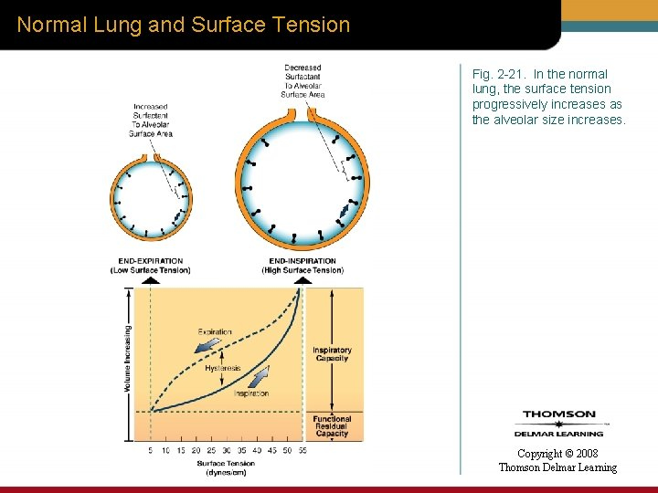 Normal Lung and Surface Tension Fig. 2 -21. In the normal lung, the surface