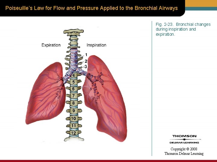 Poiseuille's Law for Flow and Pressure Applied to the Bronchial Airways Fig. 2 -23.
