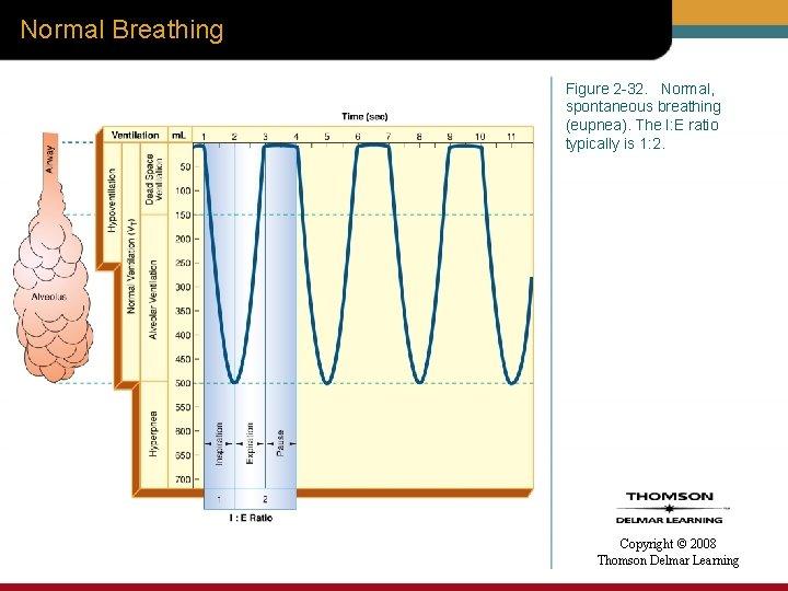 Normal Breathing Figure 2 -32. Normal, spontaneous breathing (eupnea). The I: E ratio typically