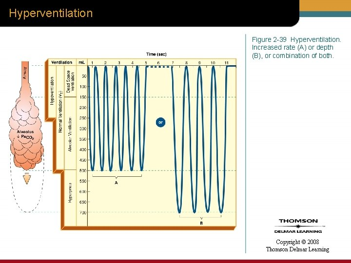Hyperventilation Figure 2 -39 Hyperventilation. Increased rate (A) or depth (B), or combination of