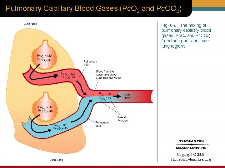 Pulmonary Capillary Blood Gases (Pc. O 2 and Pc. CO 2) Fig. 8 -6.