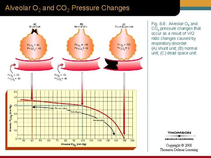Alveolar O 2 and CO 2 Pressure Changes Fig. 8 -8. Alveolar O 2