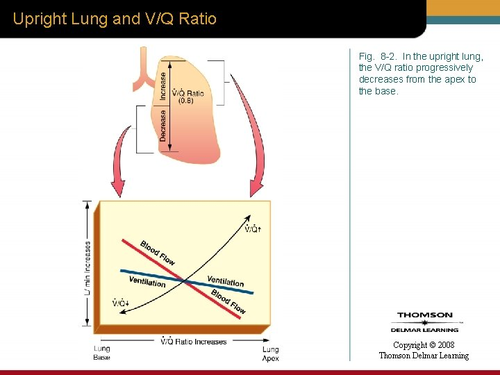Upright Lung and V/Q Ratio Fig. 8 -2. In the upright lung, the V/Q