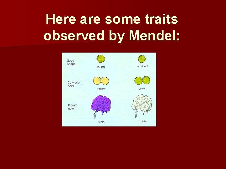 Here are some traits observed by Mendel: