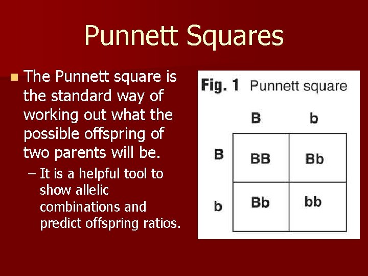 Punnett Squares n The Punnett square is the standard way of working out what