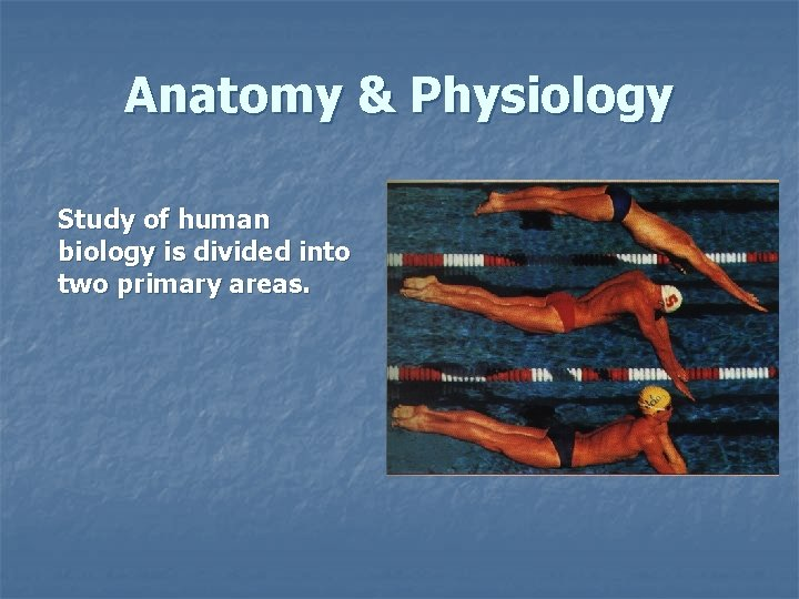 Anatomy & Physiology Study of human biology is divided into two primary areas.