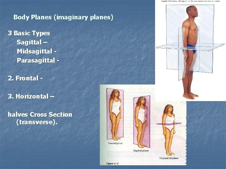 Body Planes (imaginary planes) 3 Basic Types Sagittal – Midsagittal Parasagittal 2. Frontal 3.