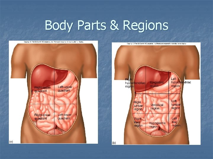 Body Parts & Regions
