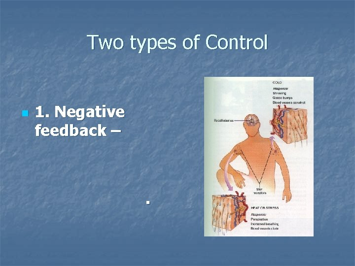 Two types of Control n 1. Negative feedback – .