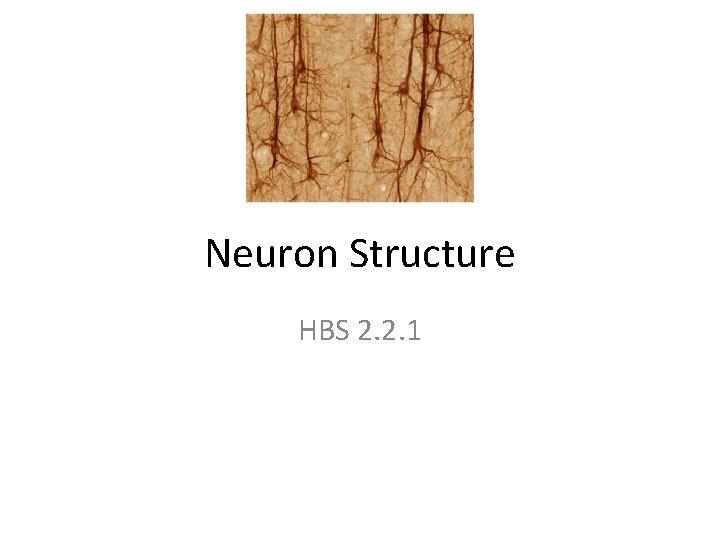 Neuron Structure HBS 2. 2. 1
