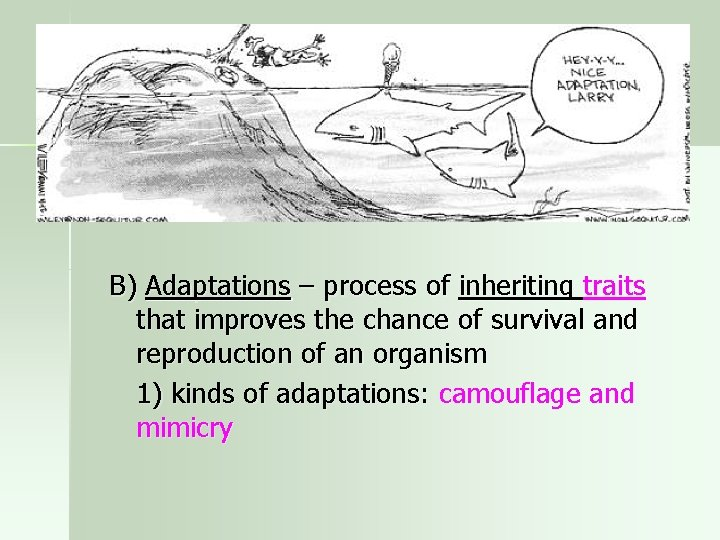 B) Adaptations – process of inheriting traits that improves the chance of survival and