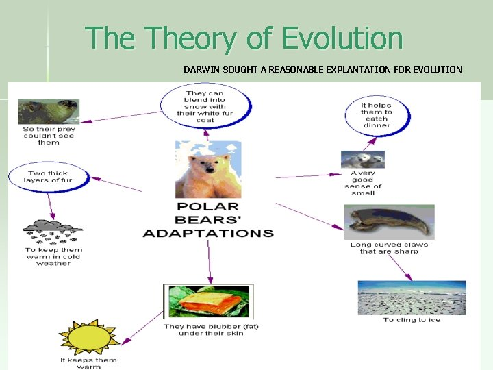 The Theory of Evolution DARWIN SOUGHT A REASONABLE EXPLANTATION FOR EVOLUTION