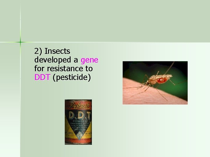 2) Insects developed a gene for resistance to DDT (pesticide)